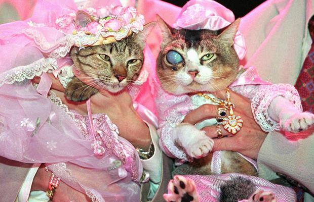 Cat Wedding1