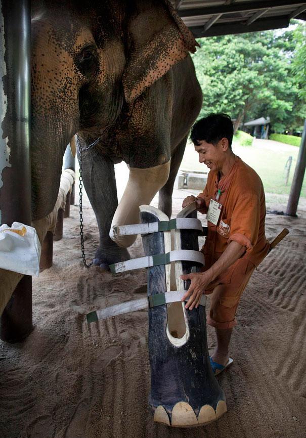 Elephant Hospital1