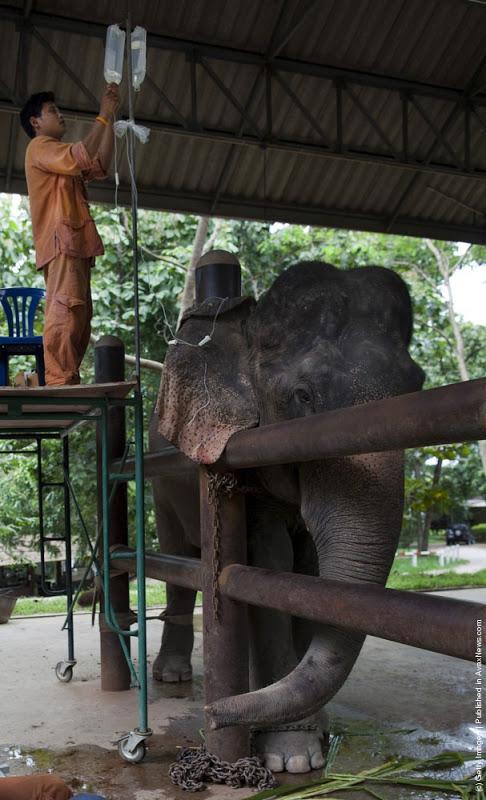 Elephant Hospital2