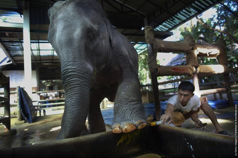 Elephant Hospital3