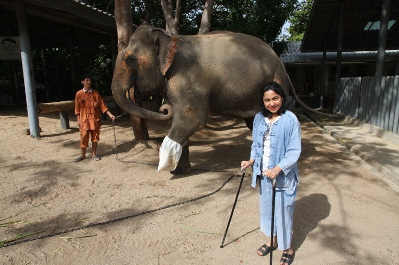 Elephant Hospital4