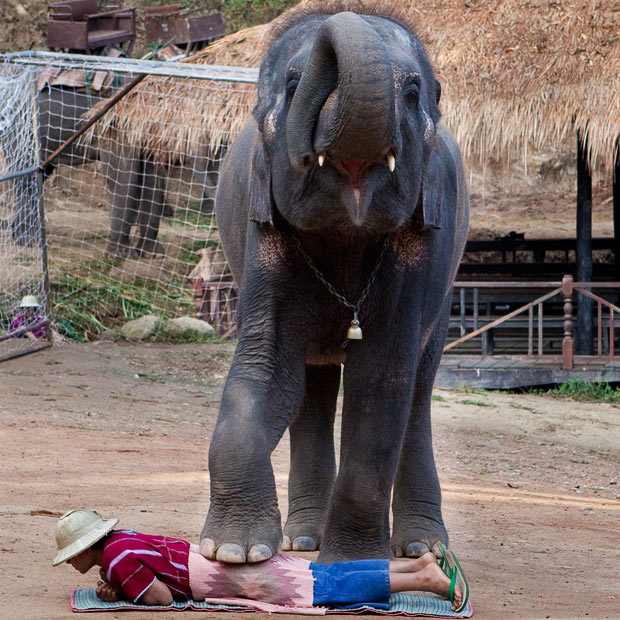 Elephant Massage1