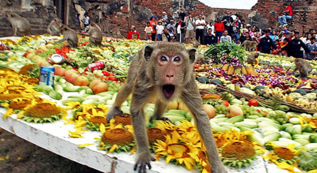 Monkey Buffet11