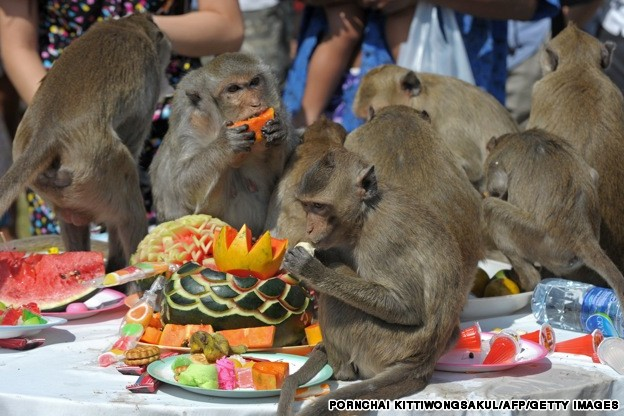 Monkeys enjoy eating fruit during the an