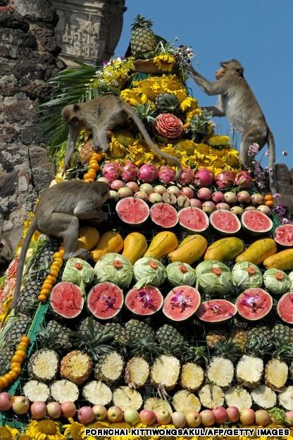 Monkeys enjoy eating fruit in front of a