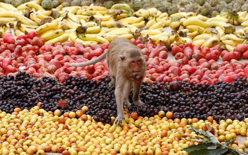 Monkey Buffet6