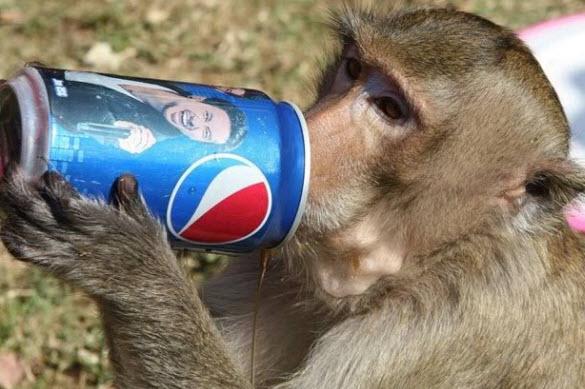 Monkey Buffet8