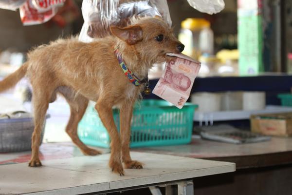 Thrifty Dog1